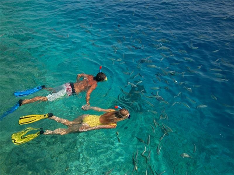 Maldivler' de Deniz Yaşamını Keşfedin