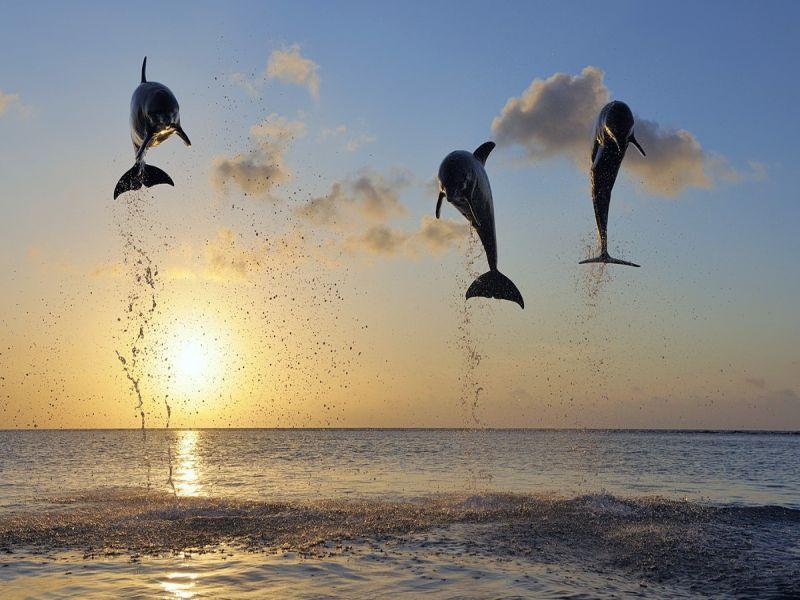 maldives__attr_9