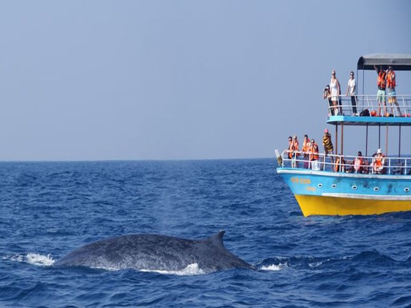 Maldivler'de Yunus ve Balina Seyri