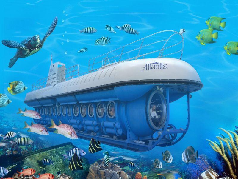 Maldivler 'de Balina Denizaltı